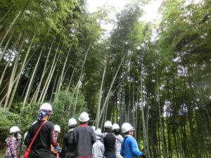 タケの伐採体験