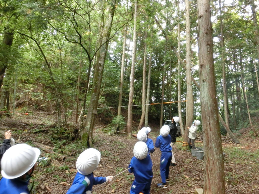 小学生の間伐体験
