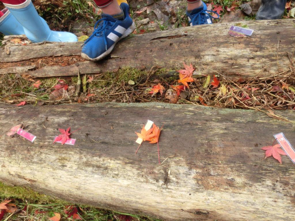 秋の色さがし