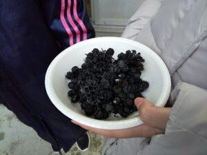 木の実の飾り炭